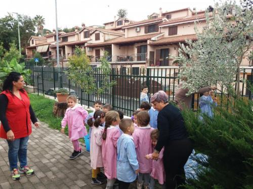 Scuola dell'infanzia via Tito Livio: Raccolta delle olive